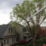 tree-removal-Oxford-PA