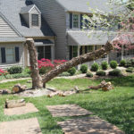 tree-removal-service-Nottingham-PA