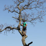safe-tree-removal-of-hazardous-tree