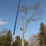 large-tree-removal-Newark-Delaware