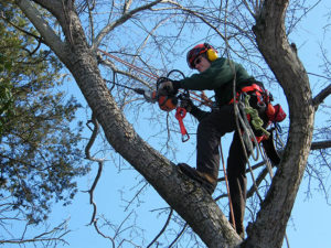 tree-cabling-Elkton-Maryland