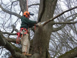tree-pruning-Newark-Delaware