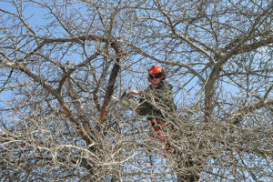 Pruning-Experts-Cecil-County