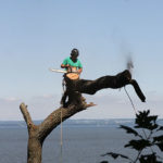 removing-tree-Chesapeake-bay